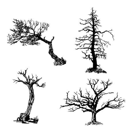 gnarled: drawing set of four trees sketch illustration