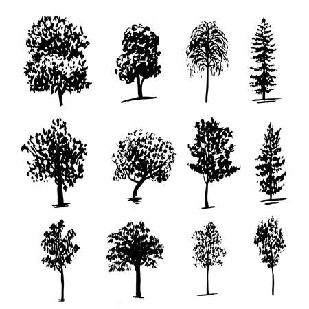 drawing collection of 12 elements of different types of trees graphic ink sketch hand drawn illustration