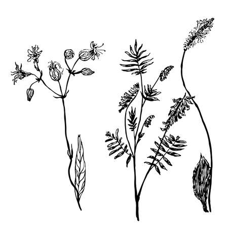 set of isolated drawings meadow grass sketch vector illustration Illustration