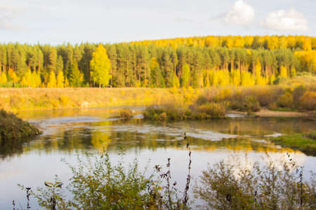 background autumn landscape panorama yellow mixed forest above the forest river
