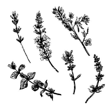 drawing set collection of five wild flowers sketch ink hand drawn vector illustration
