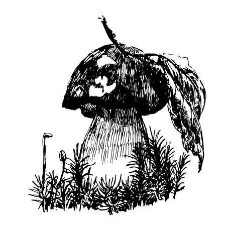 cep: drawing cep boletus mushroom sketch graphics hand drawn ink vector illustration