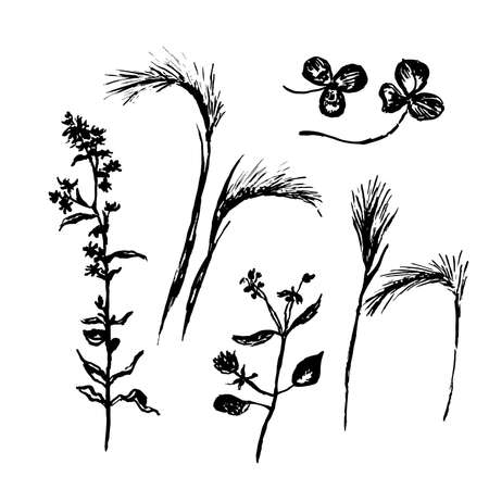 drawing set meadow and field flowers, hand-drawn sketch vector illustration