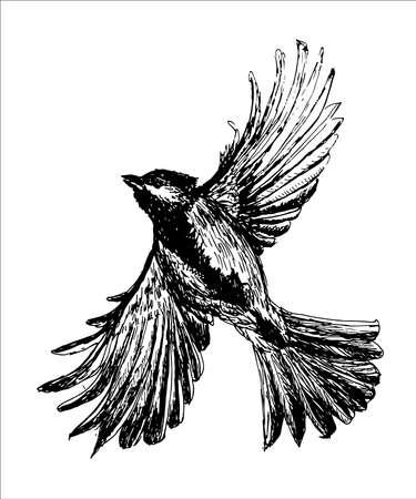 Figura tit pájaro volando con alas extendidas, un boceto dibujado a mano ilustración vectorial