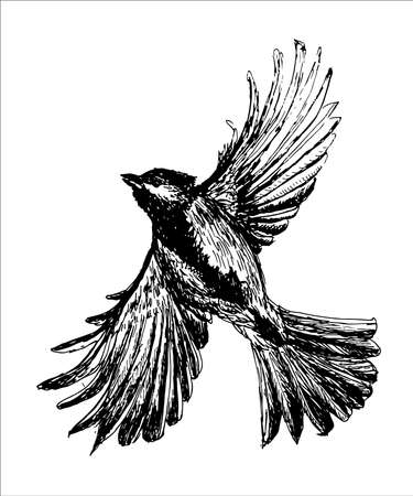spread wings: Figure tit bird flying with spread wings, a sketch hand drawn vector illustration Illustration