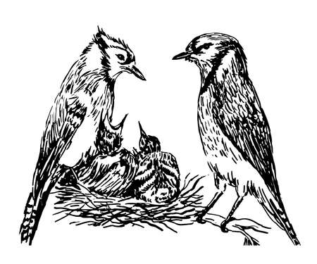drawing a pair of forest birds in the nest feeding chicks sketch hand drawn vector illustration