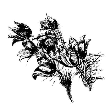 美しい花スノー ドロップを図面、スケッチ睡眠草手描きグラフィック インク分離ベクトル図