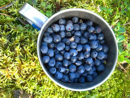 新鮮な空気でモスのゴミに熟したブルーベリーの完全なバック グラウンド風景アルミ マグカップ 写真素材
