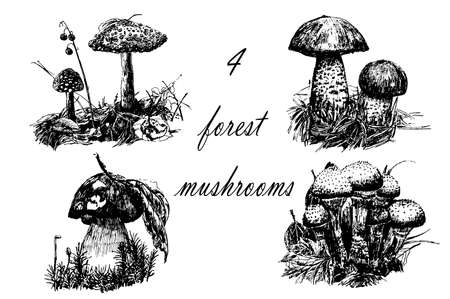 Drawing set of 4 forest mushrooms, sketch graphics hand drawn ink vector illustration