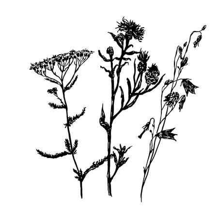フィールドの草、スケッチ、手描きのグラフィック ベクトル図の図面セット
