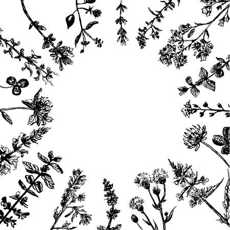 Drawing of a wreath of field grasses, a sketch, a hand-drawn graphics vector illustration