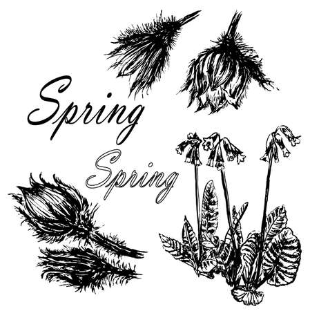 Drawing set collection of forest primroses, first spring flowers sketch hand-drawn vector illustration Illustration