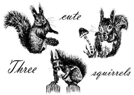 Drawing collection set of isolates, three fluffy little cute squirrels, sketch, hand-drawn graphics ink vector illustration