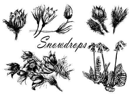 図面セットのコレクション森桜草の最初の春の花が手描きのベクトル図をスケッチ