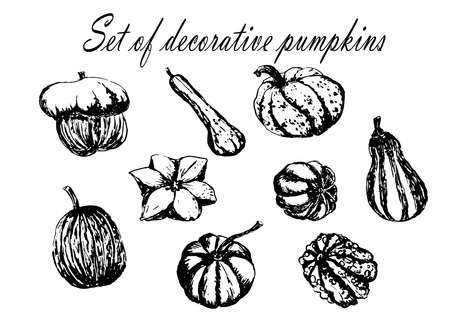Drawing set collection of decorative striped pumpkin sketch hand drawn vector illustration 向量圖像