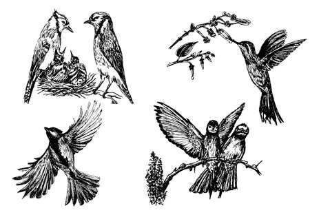 Set of four isolated bird figures, hand drawn sketch illustration.