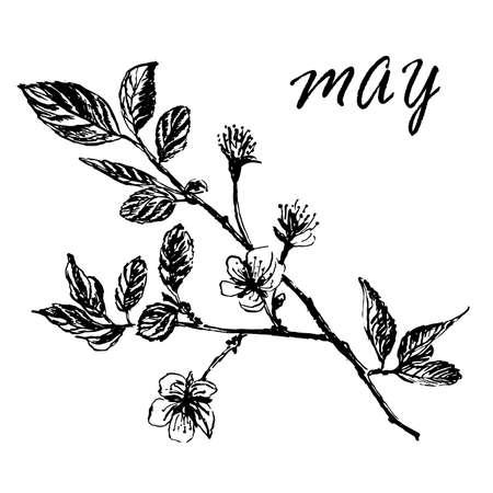 芽と葉と開花梅の木の枝の描画、インクの手描きスケッチのベクトル図