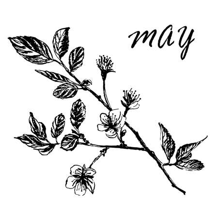 Drawing of blooming plum tree branches with buds and leaves, ink sketch hand-drawn vector illustration Illustration