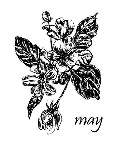野生の木の花をつけた枝の描画、インクは手描きの図をスケッチします。
