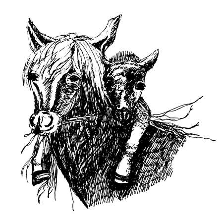 Drawing of a wild horse with a foal on the neck, sketch ink hand-drawn illustration. Vectores