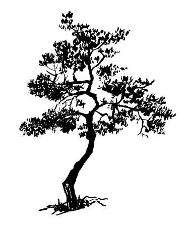 Old dry evergreen tree, sketch hand drawn ink vector illustration