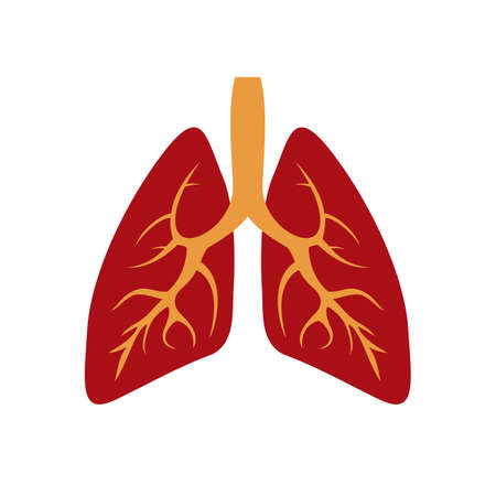 illustration of human lungs icon