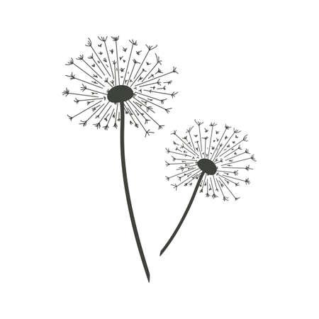 Vector illustration of dandelions. Illustration