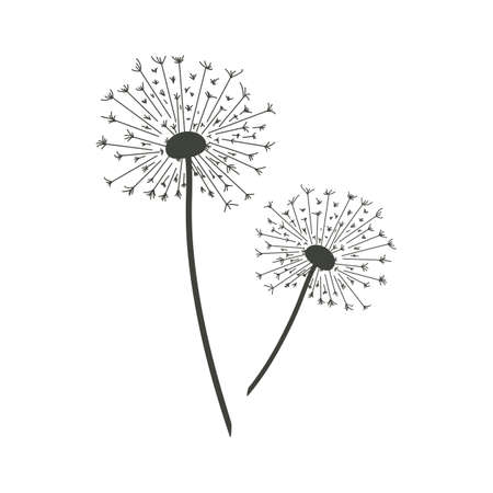 Vector illustration of dandelions. Çizim