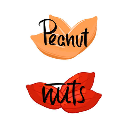 Peanut, nats hand drawn modern brush lettering text. Vector illustration for webpage, print and advertising