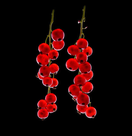 黒い背景にクローズ アップ成熟したレッドカラント。健康的で新鮮な明るい赤スグリ。熟した、ジューシーなフルーツとベリー。新鮮な赤スグリの 写真素材