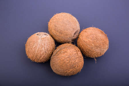 Four tropical and exotic coconuts on a dark purple background. Nutritious exotic nuts. Tasty and bright brown nuts. Whole and sweet cocos. Fresh, ripe and organic fruit of coconuts. Stock Photo