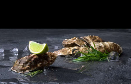 Fresh large oysters with a lime segment on top on a black background. Delicious tropical sea mollusk. Great aphrodisiac. Stock Photo