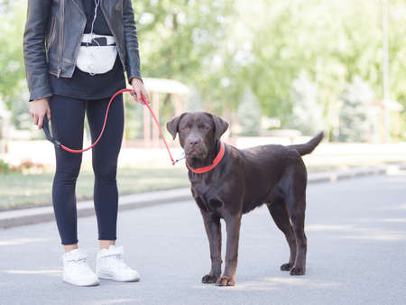 A girl stands in headphones with a dog on a leash Standard-Bild