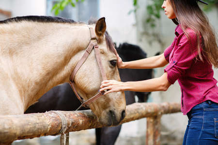 Dark-haired young girl stroking a beautiful brown horse. Outdoors.