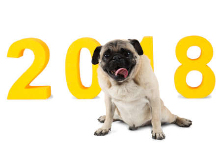 A small dog sits on the background of the inscription 2018. Isolated on white background.