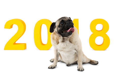 A dog sitting and looking upwards on background with the inscription 2018. A symbol of the new year. Isolated. Stock Photo