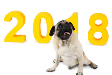 Yellow inscription 2018, next to it a small dog sits. Symbol of the new year. Isolation. Stock Photo