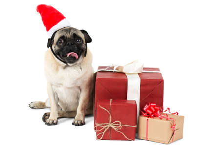 A pug dog, dressed in Santa hat, sits beside packaged gift boxes. Isolated on white background.
