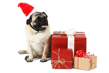 A funny dog, dressed in Christmas hat, sits near the presents. Isolated.