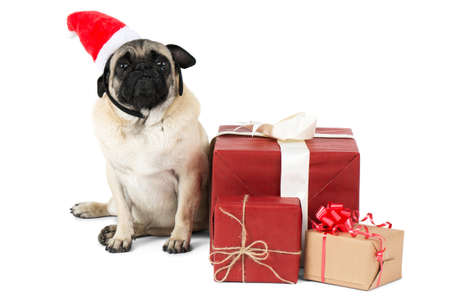 A little dog, dressed in a red hat, sits near the gifts packed in wrapping paper. Isolated on white background.
