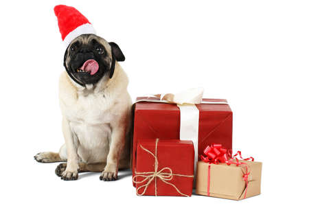 A little dog with a flat face, in a red Santa hat sits on side near the gift boxes. Isolated on white background.
