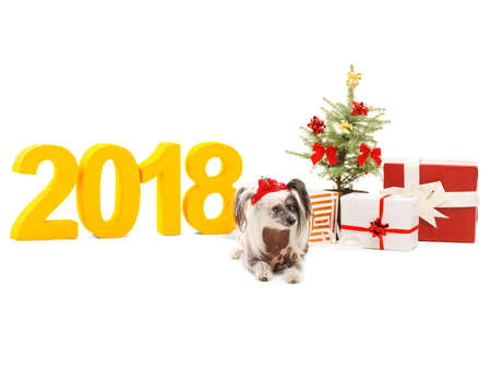 New Years picture, a small dog, a Christmas tree and gifts on a background of inscription 2018. Isolatio. Indoors.