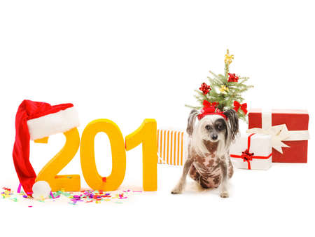 A small Chinese Crested sits instead of the last digit in the inscription 2018. New Years theme. Isolated.