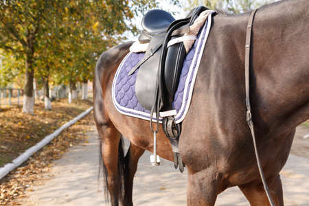 Torso of a beautiful brown horse with a fixed saddle on its back. Outdoors. Stock Photo