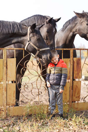 A little boy stands near the black beautiful horses and smiles sweetly. Outdoors.