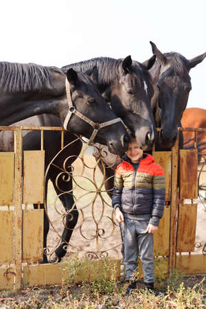 A small boy stands near black horses. Outdoors.