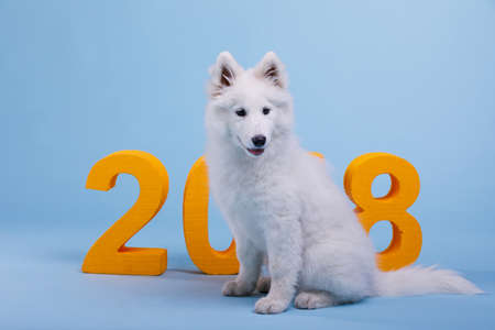A small fluffy white-colored samoyed puppy sits on a blue background, next to the orange large number 2018.