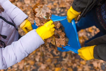 Dad keeps the garbage bag and the daughter lays the leaves in the package. View from above
