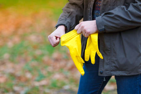A man in the autumn park, in the open air, puts on rubber, yellow gloves to harvest the fallen leaves. Stock Photo