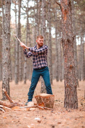 A man with a red beard and hair, cuts a tree in the forest. Outdoors.